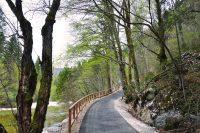 Kolesarska pot Bohinj